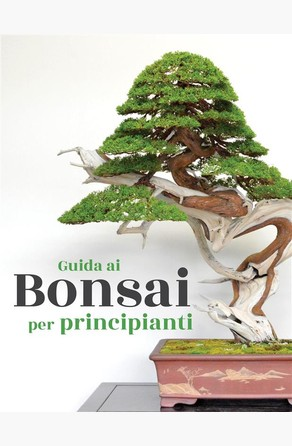 Guida ai Bonsai per principianti Bonsai Empire