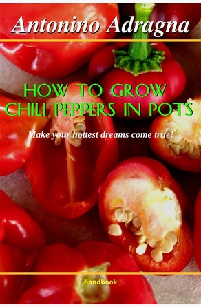 How To Grow Chili Peppers In Pots Antonino Adragna