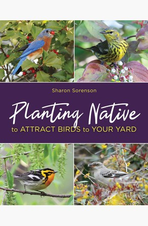Planting Native to Attract Birds to Your Yard Sharon Sorenson