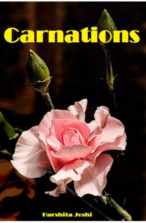 Carnations Harshita Joshi