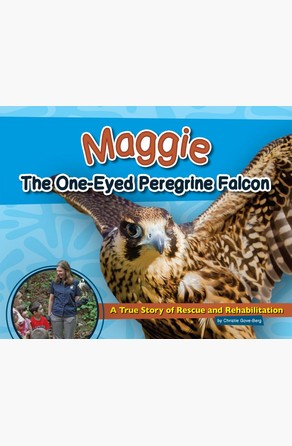 Maggie the One-Eyed Peregrine Falcon Christie Gove-Berg