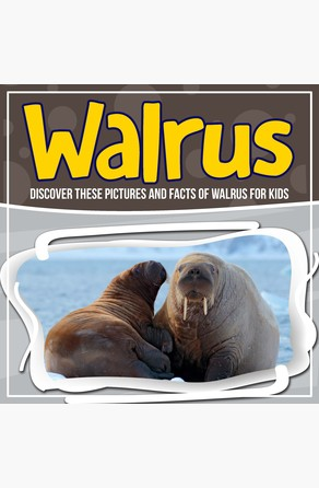 Walrus: Discover These Pictures And Facts Of Walrus For Kids Bold Kids