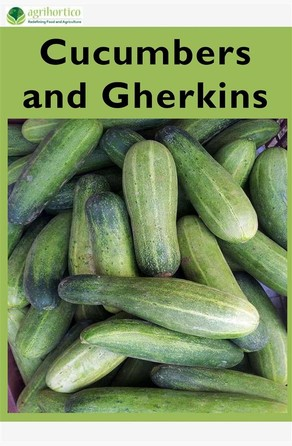 Cucumbers and Gherkins Agrihortico CPL